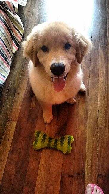 Luke-e-brinquedo